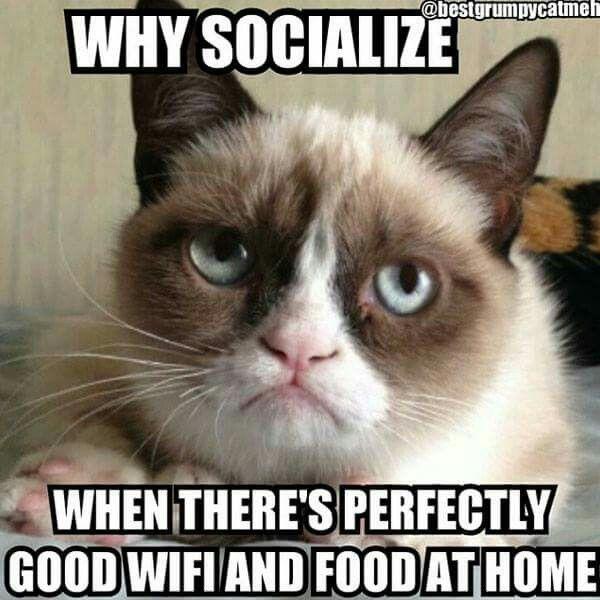 Lol. My feelings exactly Grumpy Cat!                                                                                                                                                                                 More