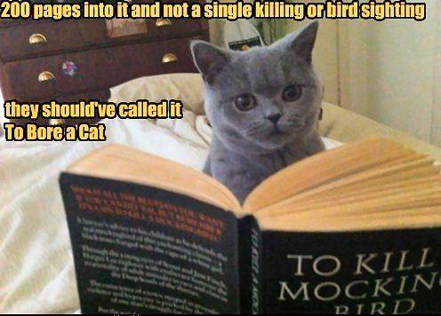 """To bore a cat"": Kitty Cat, Funny Cat, Cat Humor, Pet, Book, Mocking Birds, Funny Stuff, Silly Kitty, Cat Memes"