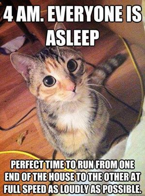 This is sooo true with younger cats! Now that my cats are older they have settled down and keep similar hours to me. Finally.