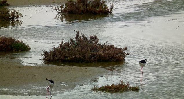 Ammitis wetland   Naxos.gr