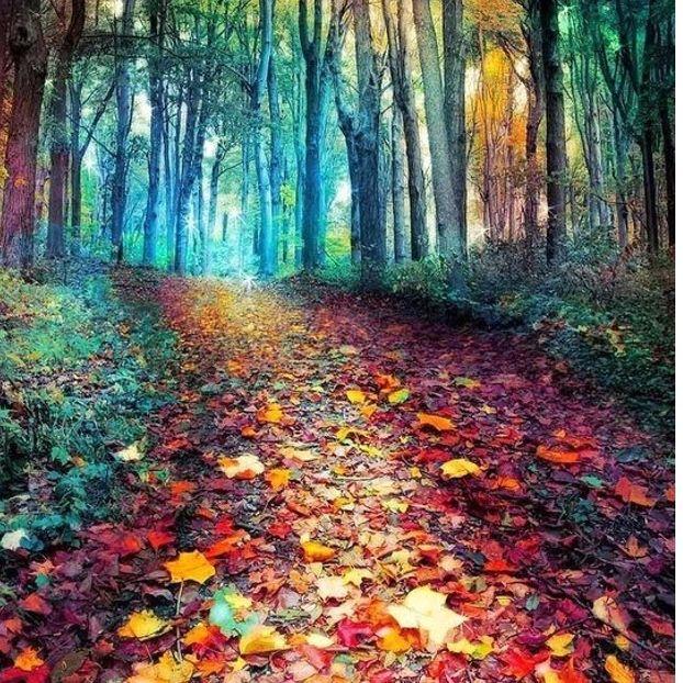 L'autunno e i suoi 1000 colori