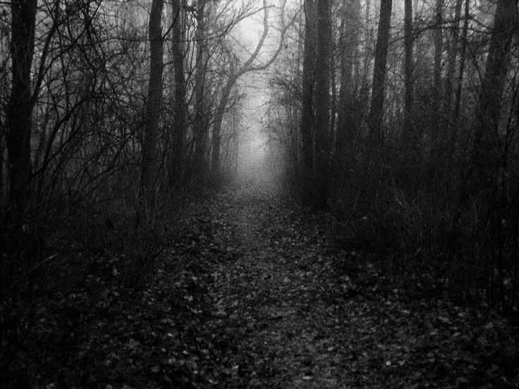 deep forest in black