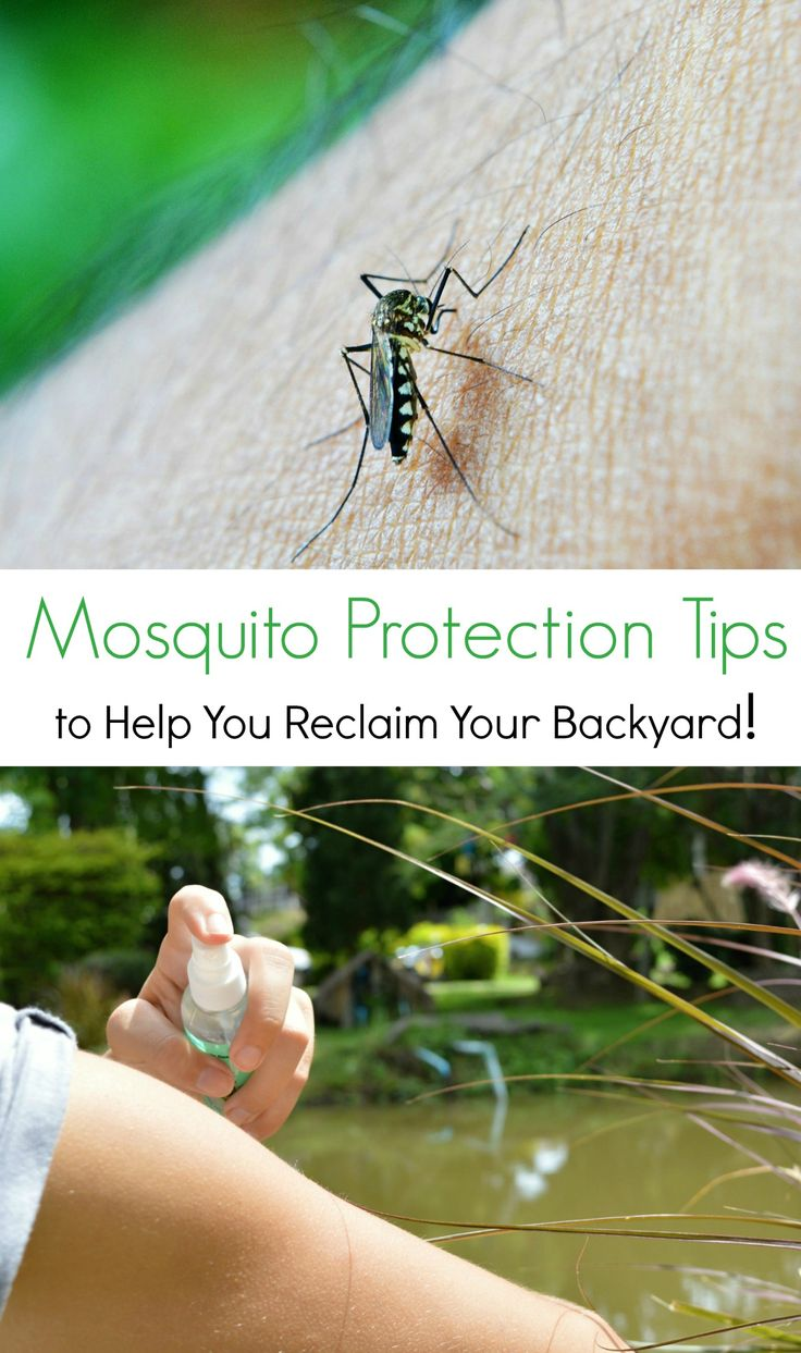Are you planning a backyard BBQ or an after dinner walk Want to go camping in the backyard with your kids or plant a garden? Check out these mosquito protection tips and reclaim your backyard
