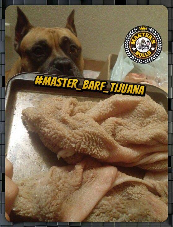 Green tripe y el catador oficial de #Master_BARF_Tijuana Noah de 6 años de edad.
