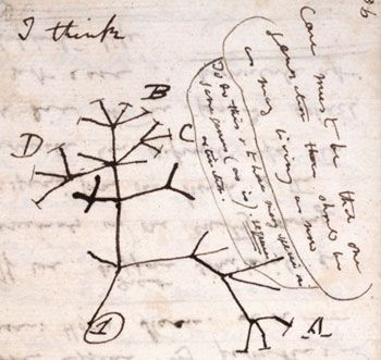 Darwin's first sketch of the tree of life, found in one of his notebooks from 1837. Image reproduced by kind permission of the syndics of Cambridge University Library.