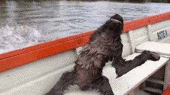 When everyone else is moving too fast: | 15 Sloth GIFs That Explain Your Entire Existence