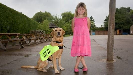 Many people owe their lives to trained diabetic alert dogs that can detect blood-sugar fluctuations before the patient can. Almost 350 million people have diabe