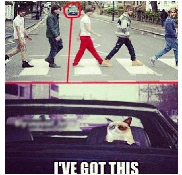 Grumpy Cat runs over One Direction