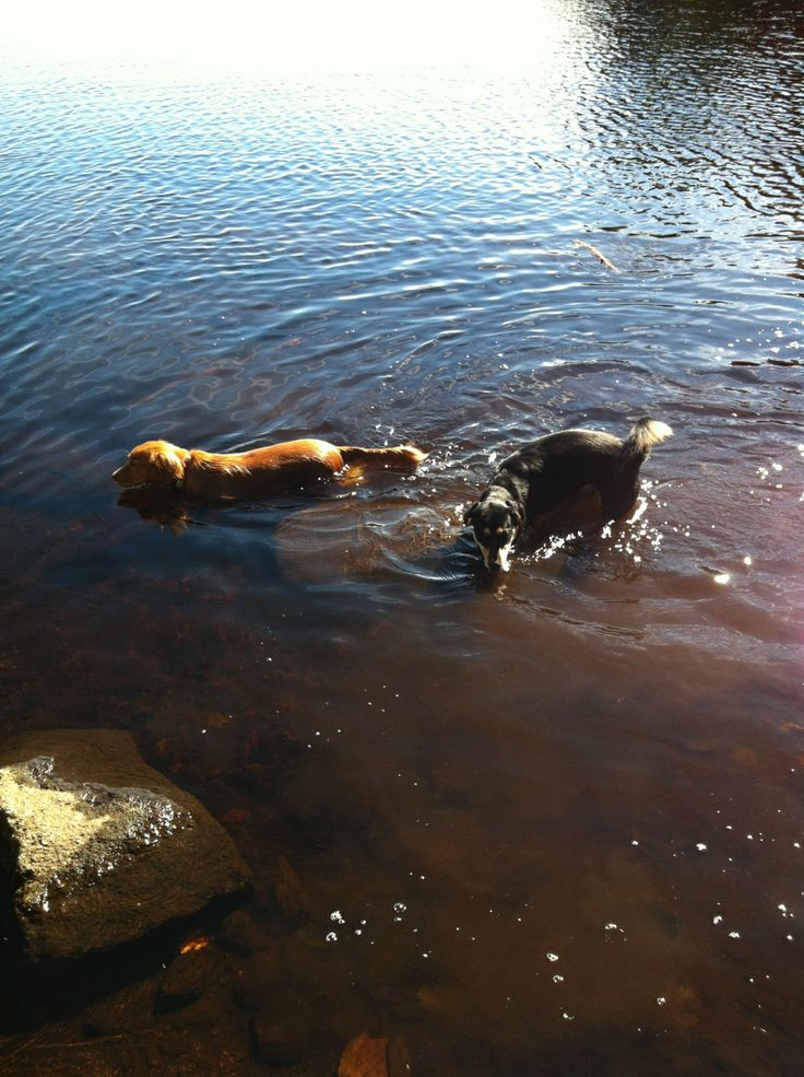 How To Get Rid Of That Wet Dog Smell Gone To The Dogs