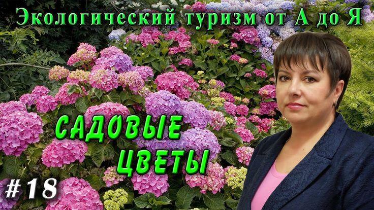 Экологический туризм от А до Я № 18 Садовые цветы