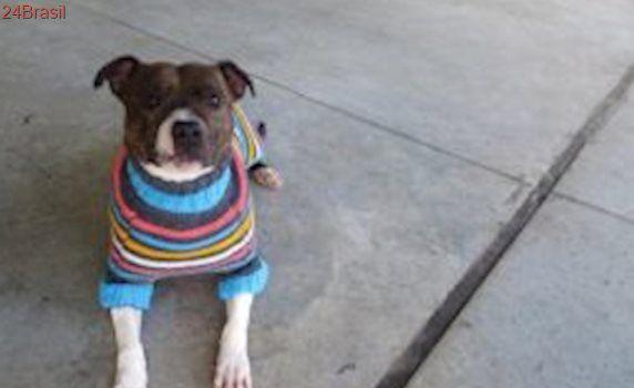 Abrigo confecciona roupinhas coloridas para cães com pelo escuro