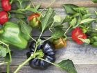 The mighty capsicum JUSTIN RUSSELL gets to the seedy heart of capsicums and comes to the conclusion we'd be 'stuffed' without them.