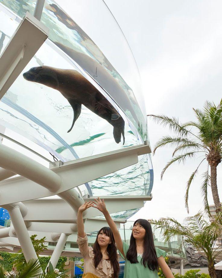 Aquarium, Ikebukuro, Tokyo, Japan #aquarium