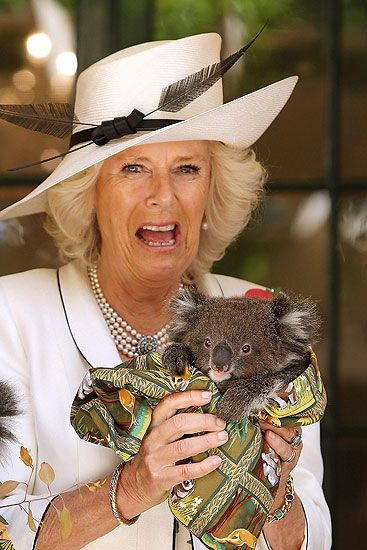 La donna che sussurrava ai koala - La duchessa di Cornovaglia in visita in Australia con un cucciolo di koala in braccio (Epa/De Klerk)