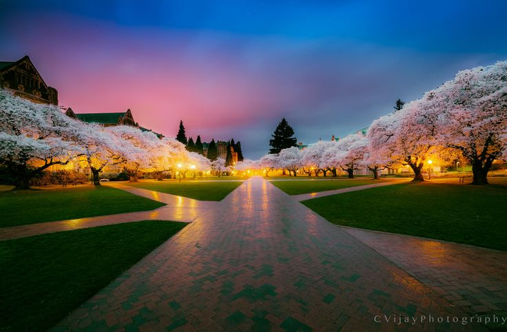 Photograph Cherry Blossems by Vijay Chebium on 500px