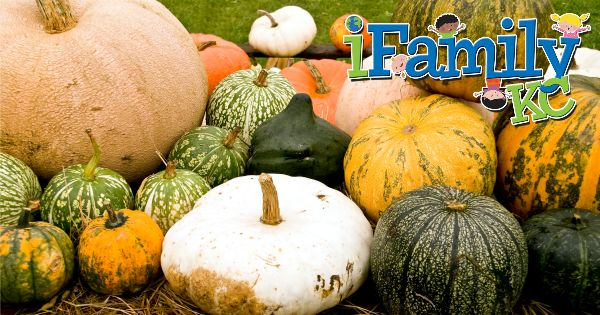 Pumpkin Patches You NEED to visit in Kansas City!