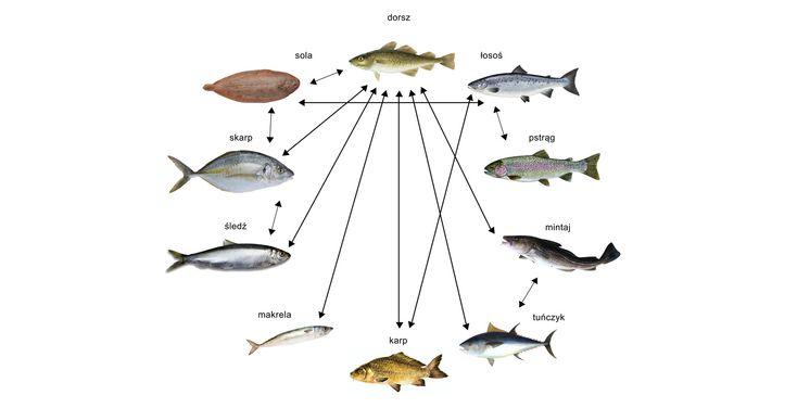 Reakcje krzyżowe parwalbumin ryb.