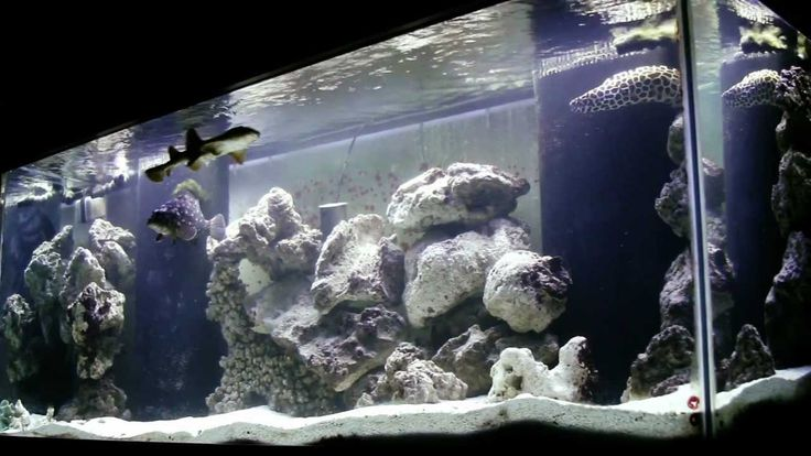 300 gallon aquarium - Google Search