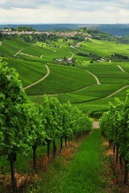Stuttgart's winning wine tradition