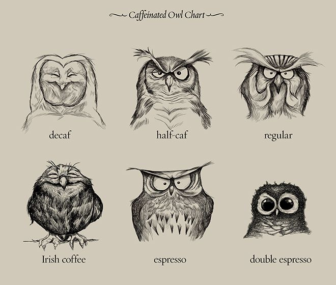 "Caffeinated owl chart. The happiest one seems to be the ""irish coffee"" owl. Lol"