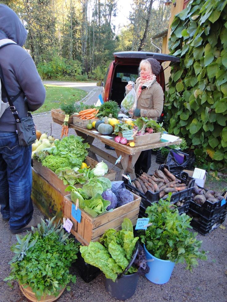 Mäntsälässä Heinolan biodynaamisella tilalla: Kylvetään Tulevaisuutta -liike järjestää kylvötapahtumia eri puolilla Eurooppaa lisätäkseen kunkin oman kylvökokemuksen kautta tietoisuutta GMO-vapaista siemenistä, jalostustyöstä ja biodynaamisesta viljelystä. 26. toukokuuta 2013 klo 14 -Maatilan esittely ja kylvökahvit -Taimimyyntiä Eteläinen pikatie 540 – 04480 Haarajoki     http://heinolantila.wordpress.com/