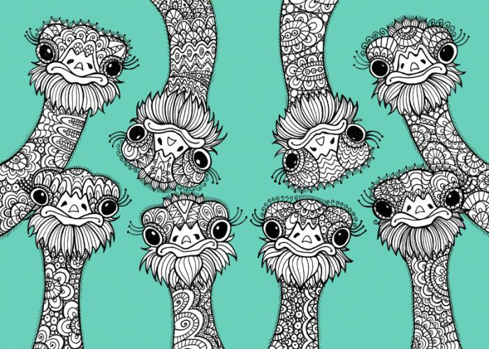 Ostrich colouring page Adult