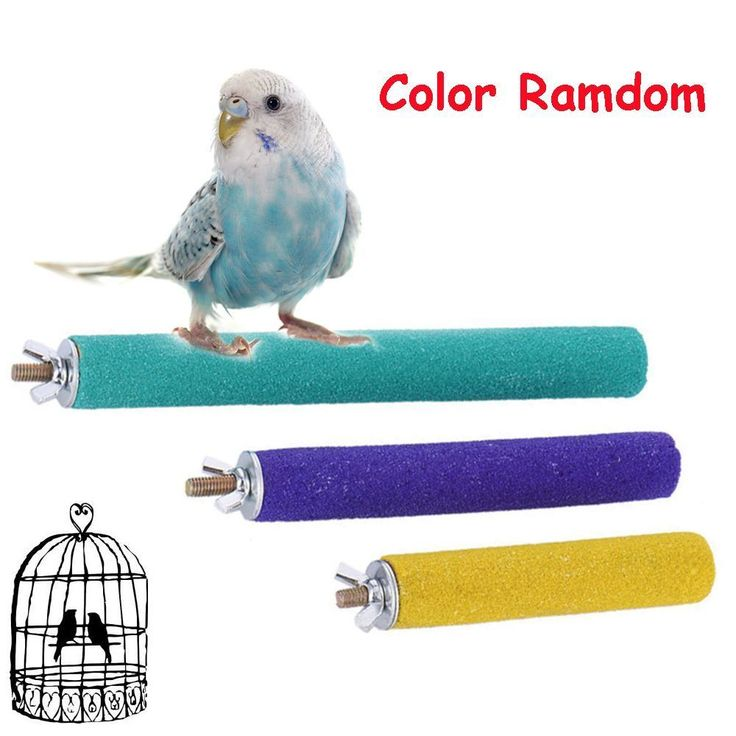 Color Random Bird Cage Station Platform Parrot Perches Stand Paw Grinding