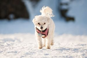 Walking Your Dog in a Winter Wonderland? Protect Your Pet's Paws with These Tips