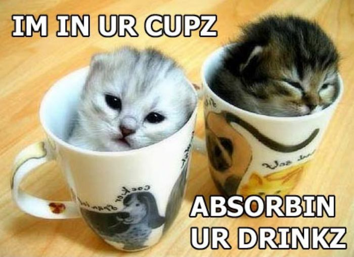 Funny Kittens | Funny white kittens Cute Kittens in Cups pictures online