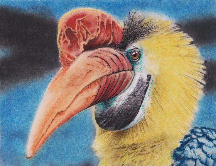 Beautiful Creatures Adult Coloring Book: Hornbill bird coloring examples - Huelish Coloring Books