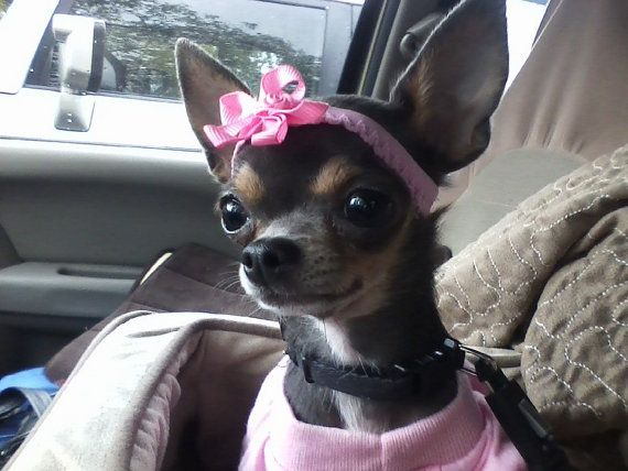 Chihuahua Headband by digginitdesigns on Etsy