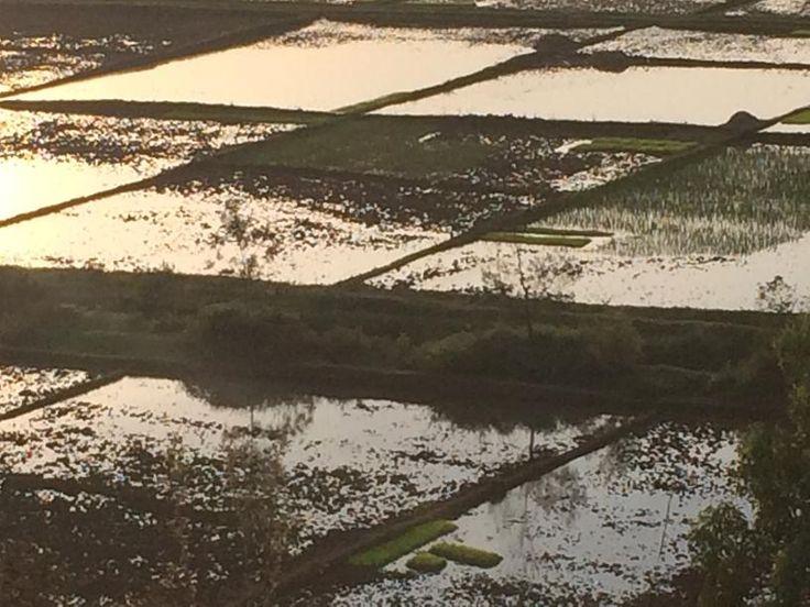View over rice fields, Butare, Rwanda (2)