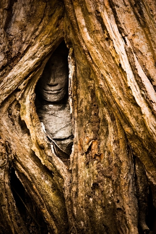 Mysterious Temples In World: 25+ Best Ideas About Tree Faces On Pinterest