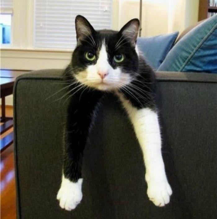 Шкодливый кот ободрал угол дивана, но хозяйка не растерялась и совершила чудо!
