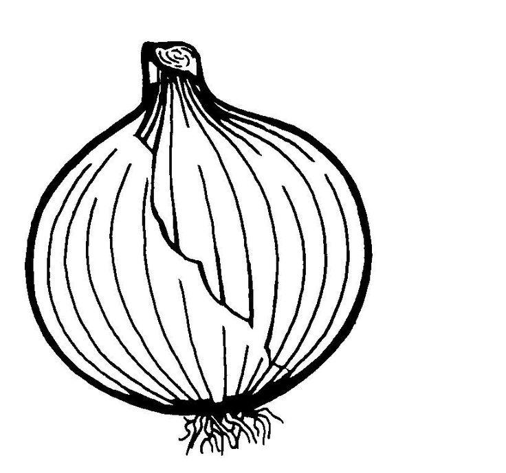 img/dessins-cliparts de fruits et legumes/oignon.jpg