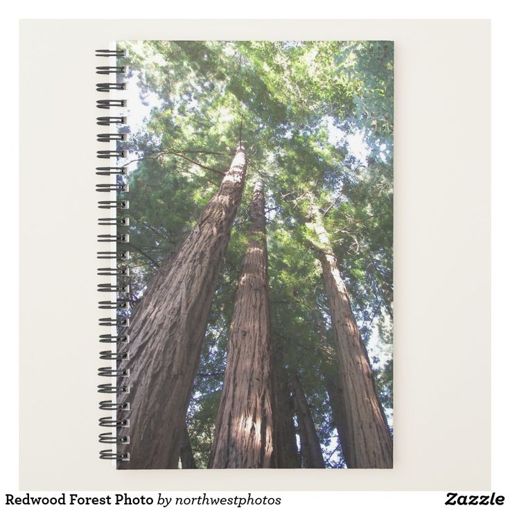 Redwood Forest Photo Planner
