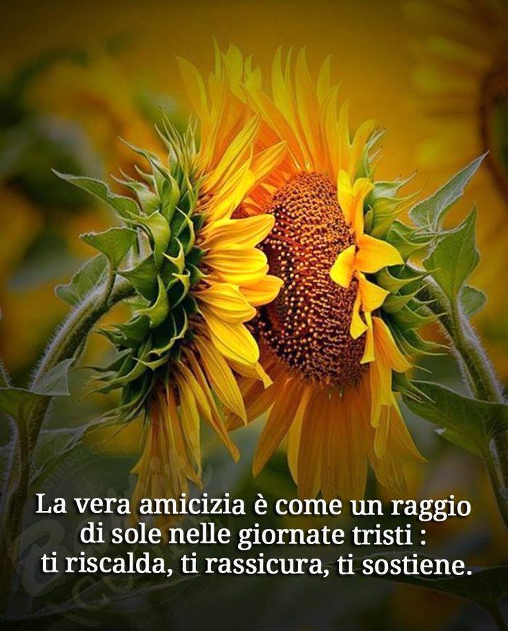 La vera amicizia è come un raggio di sole nelle giornate tristi: ti riscalda, ti rassicura, ti sostiene. #amicizia
