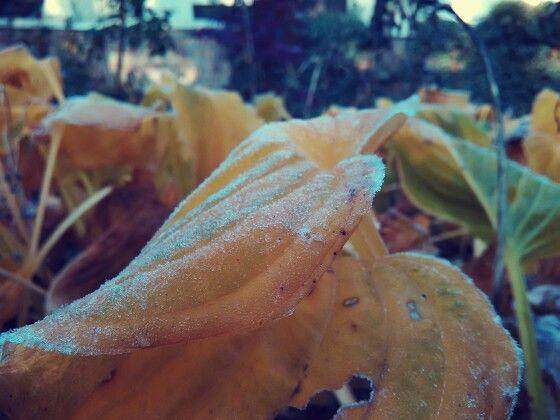 -2°C  It's cold!  Grhhh.
