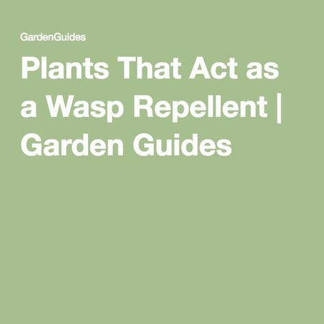 Plants That Act as a Wasp Repellent | Garden Guides                                                                                                                                                     More