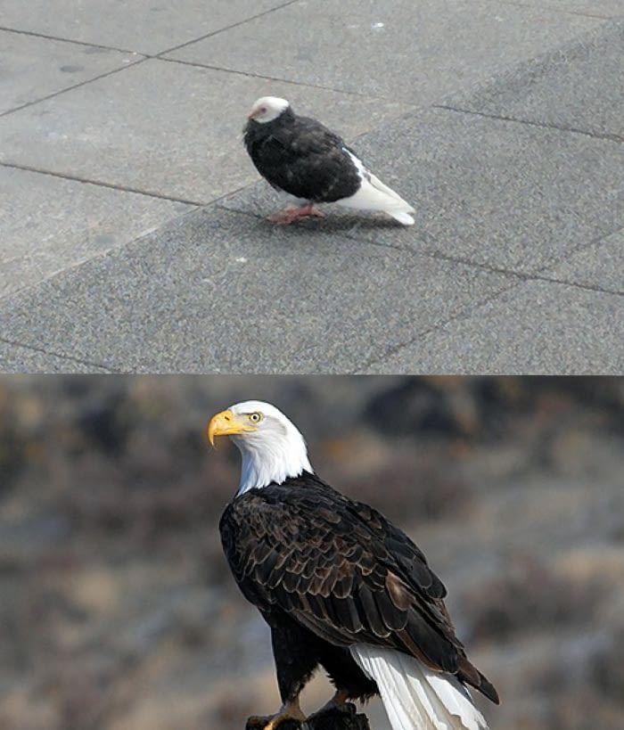 eb5aa835218755a2ce5fd48b1a83af47 the 25 best bald eagle meme ideas on pinterest make me bald