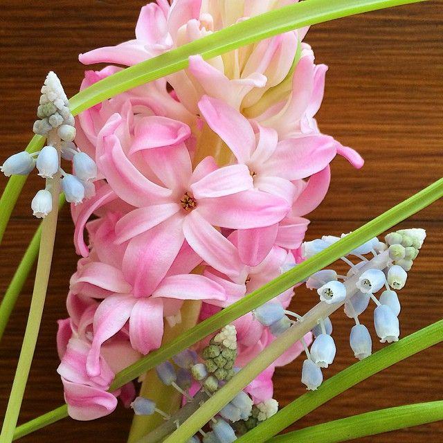Живые! Самовыращенные, для вдохновения)  #цветы #флористика #букет #весна #гиацинт