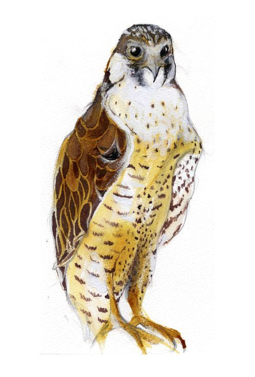 ARTFINDER: Peregrine Falcon by Nancy Moniz Charalambous - A snowy solitary Peregrine Falcon stands in wait. Painted with inks and gouache