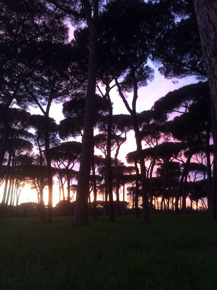 Welcome Home. Villa Doria Pamphili sunset. #Sunset #Trees