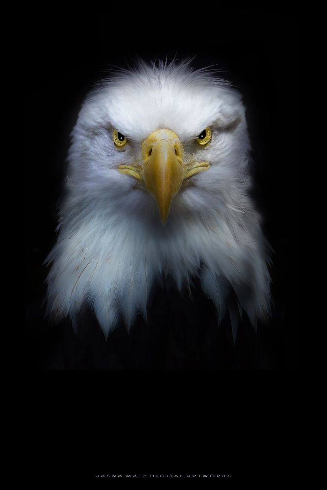 ~ Proud Eagle ~ by Jasna Matz on 500px                                                                                                                                                      More