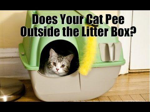 17 Best Ideas About Cat Pee On Pinterest Cat Urine Cat