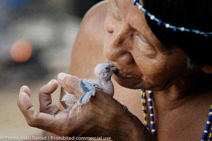Indígenas no contactados en el Yasuní. Foto: Joao Ramid. #SoYasuní
