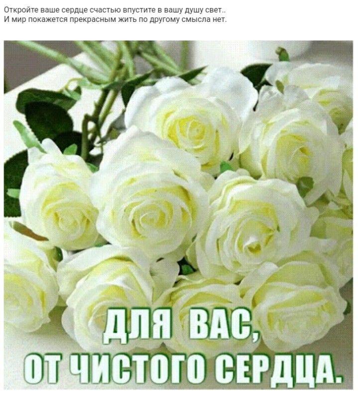 "Картинки по запросу ""анимашки бульвар роз"""