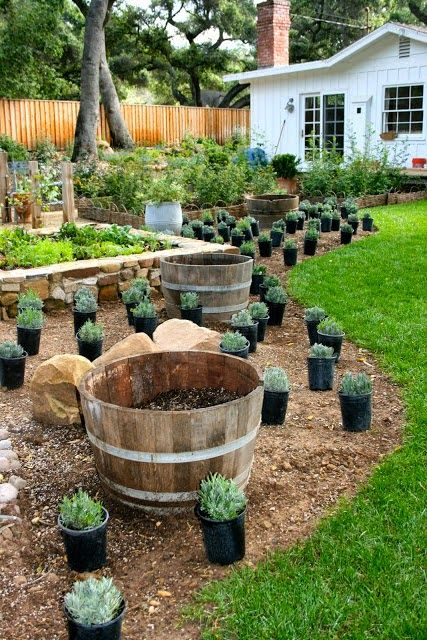 The Polished Pebble Herb Garden Gardening How To S