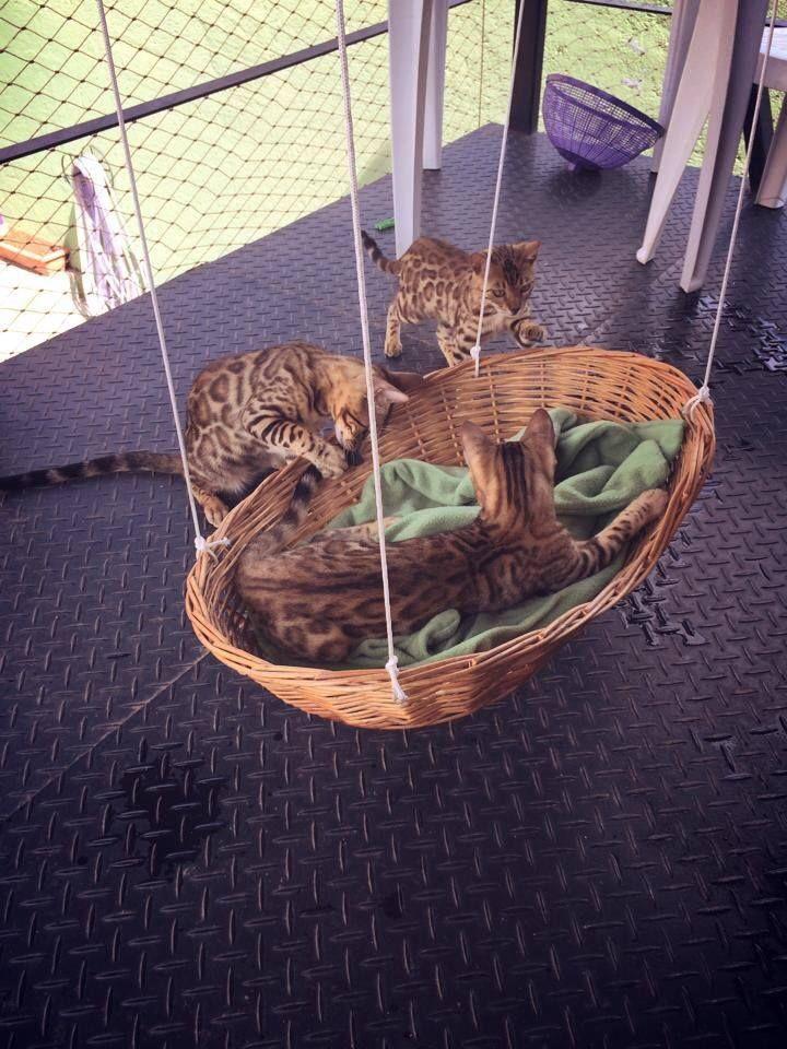 kitty hammock from wicker laundry basket
