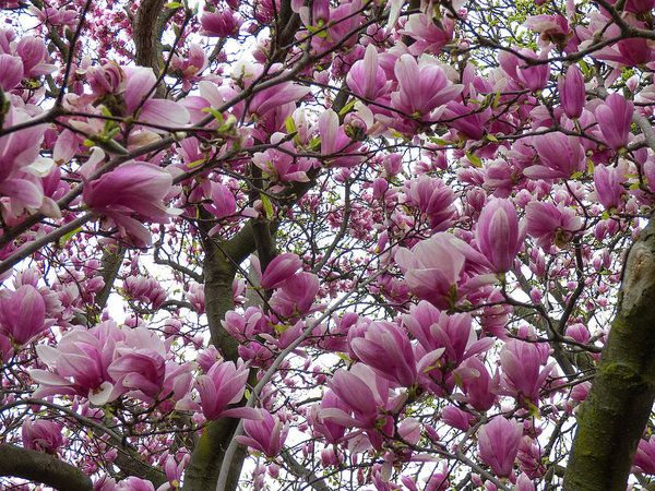Under The Tulip Tree Art Print by Leslie Montgomery.
